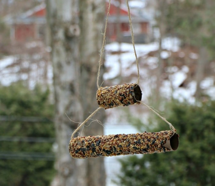 cardboard tube bird feeders