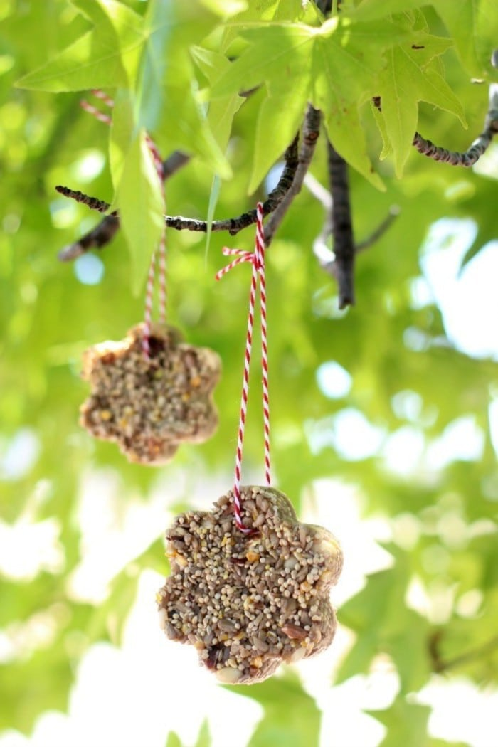 gelatin bird seed feeders
